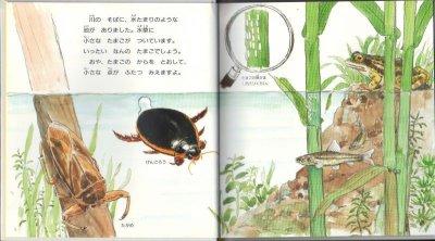 画像1: あめんぼがとんだ (新日本動物植物えほんII-7)【状態B】