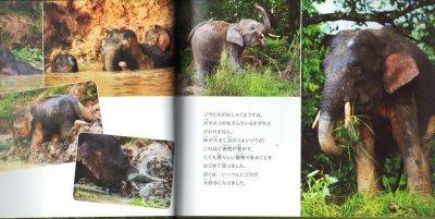 画像1: ゾウの森とポテトチップス【状態B】